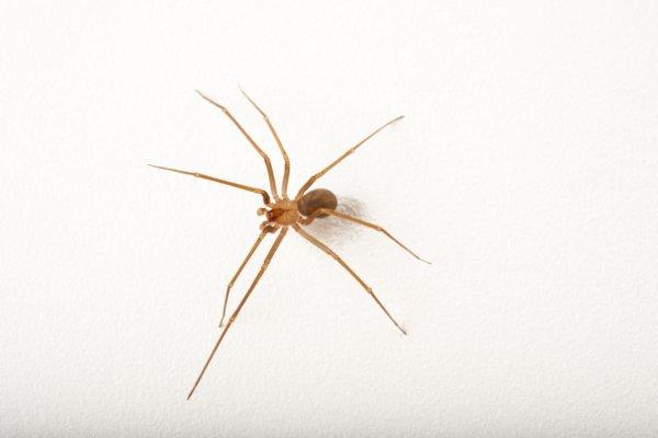 Ядовитые пауки заселились в постель жительницы США