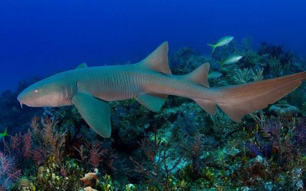 На Багамах во время съемок акула атаковала блогершу