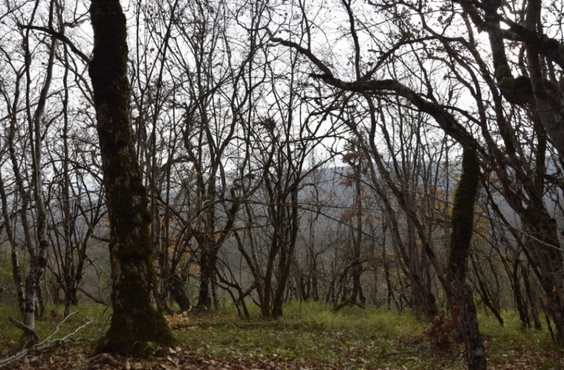 В лесу нашли мертвой молодую женщину