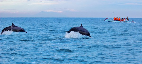 Ученые: Люди разрушают половую жизнь дельфинов