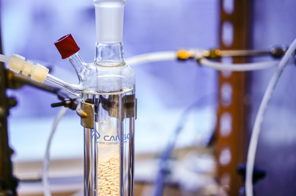Ученые развенчали наиболее популярные мифы о ГМО