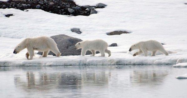 Ученые: Ледники на Северном и Южном полюсах уменьшаются «беспрецедентными» темпами