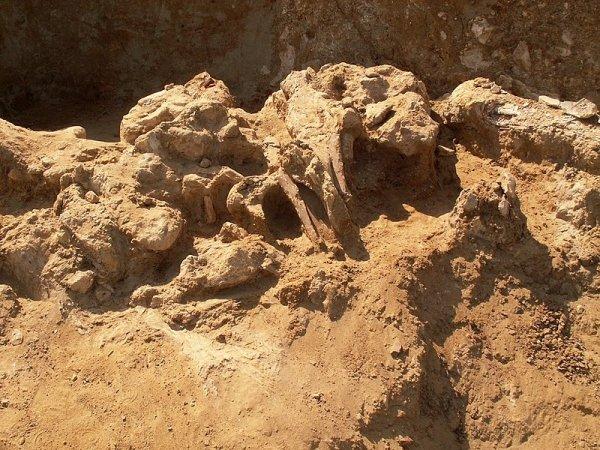 На юге Уэльса впервые обнаружили кельтское захоронение с колесницей