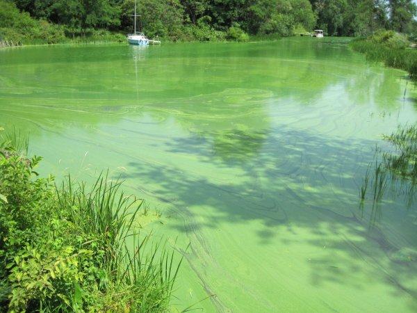 Ярко-зеленый цвет воды водохранилища шокировал воронежцев