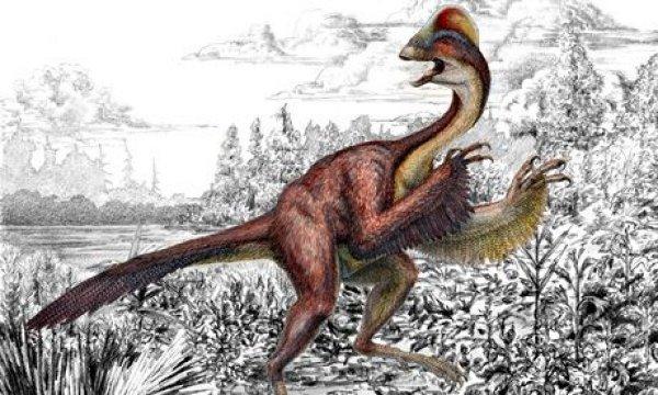 Ученые нашли новый вид, значащийся между динозаврами и птицами