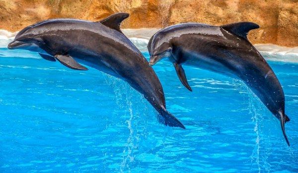 Ученые выявили у дельфинов разные диалекты