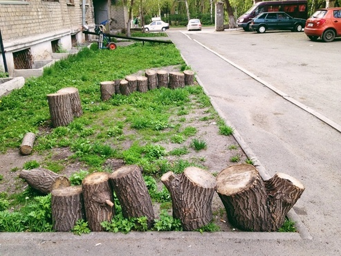Тюменский ученый предложил спасать деревья «дактилоскопией»