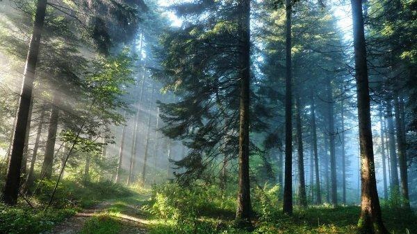 Эксперты ошиблись в вычислении ресурсов лесного углерода