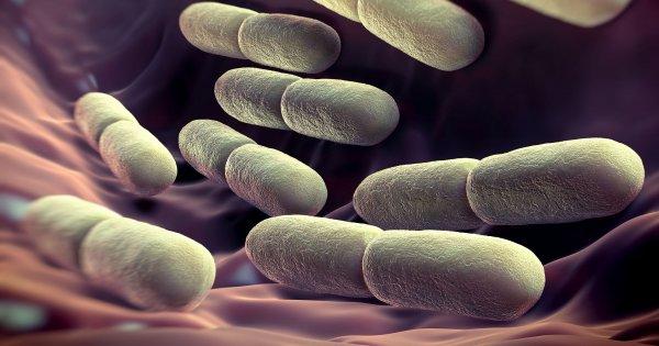 Ученые выявили метод определения возраста человека по кишечным бактериям