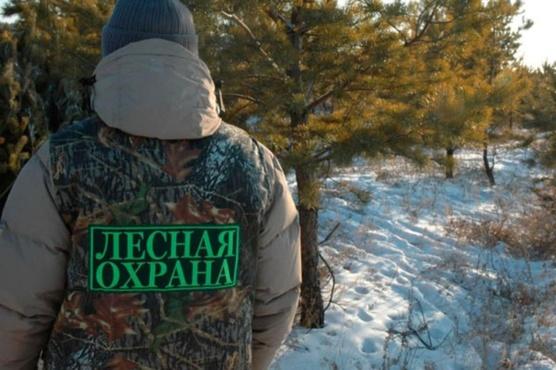 Тюменцы могут стать лесными инспекторами