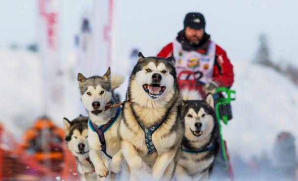В Тюмени пройдет Рождественская гонка на собачьих упряжках