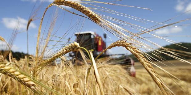 В Тюменской области аграрный сектор продемонстрировал рост