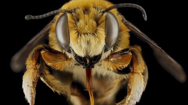 Ученые выявили у пчел способность к складыванию и вычитанию