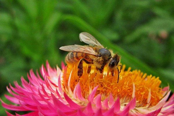 Рай не наступит: Человечество погибнет через век из-за вымирания насекомых