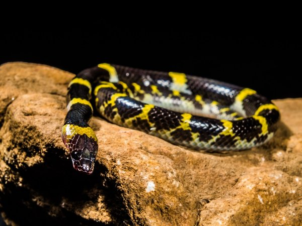 Немецкие ученые выяснили, как змеи потеряли конечности