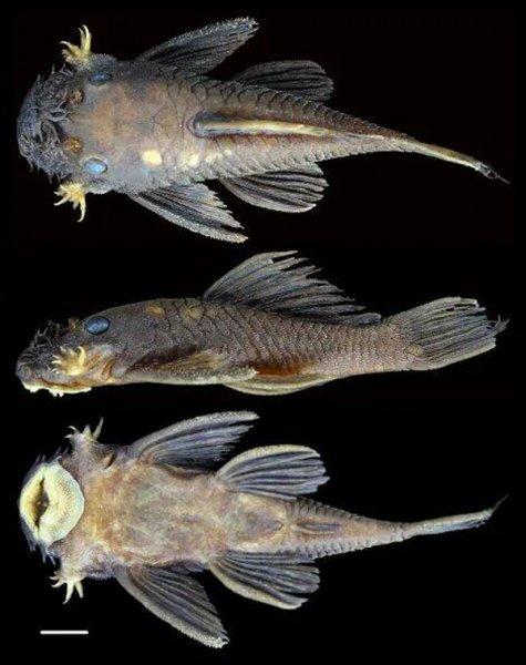 Рыбы апокалипсиса: Мутировавшие сомы выдали изменение Земли из-за Нибиру