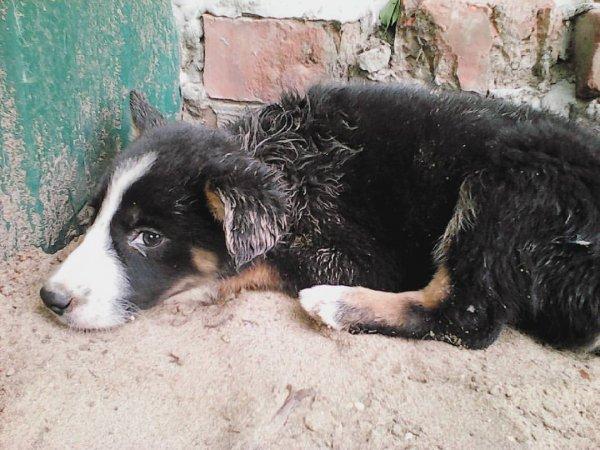 «Не живодёрство, а мошенничество!»: Раскрыта схема продажи предсмертных животных