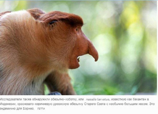 Астрономия поможет спасти орангутангов от исчезновения – учёные