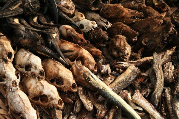 Массовое вымирание в разгаре: Из-за людей Земле нужно 10 млн лет, чтобы вернуть биоразнообразие
