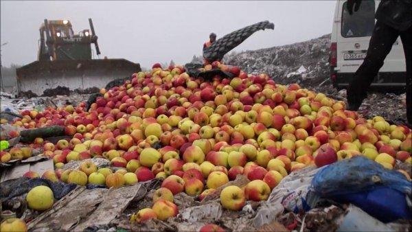 Русский - значит голодный: Пока тысячи россиян голодают, санкционную продукцию давят бульдозерами