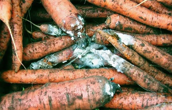 Гнилые овощи и грязная посуда: прокуратура вскрыла факты нарушений в общепитах детских учреждений Прикамья
