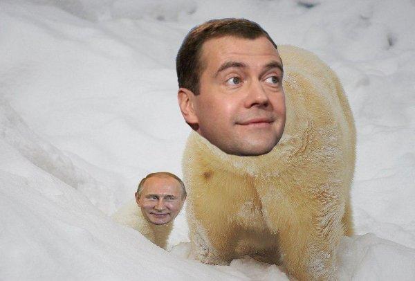У правительства свой Умка: Медведева сравнили с заблудившимся мишкой и он растопил сердца россиян