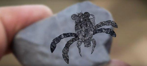 Взрослая личинка: Учёные нашли останки странного доисторического краба