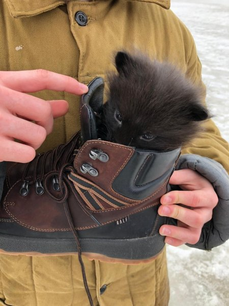 В Сургуте, рискуя жизнью, юноша спас замерзающего лисенка