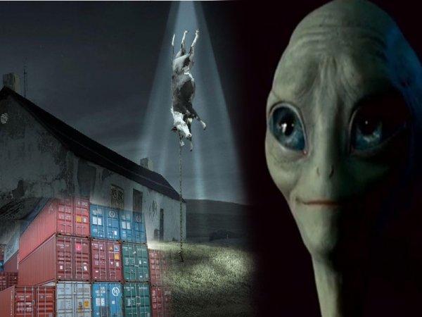 Инопланетяне похищают людей в специальных контейнерах – мнение