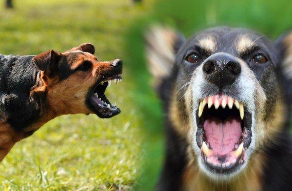 В Приморье собаки загрызли еще одного человека