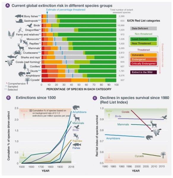 ООН: Земле грозит вымирание миллиона видов растений и животных