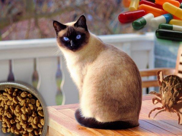 Здоровые и пушистые: Ветеринары рассказали о главных правилах по уходу за домашними кошками
