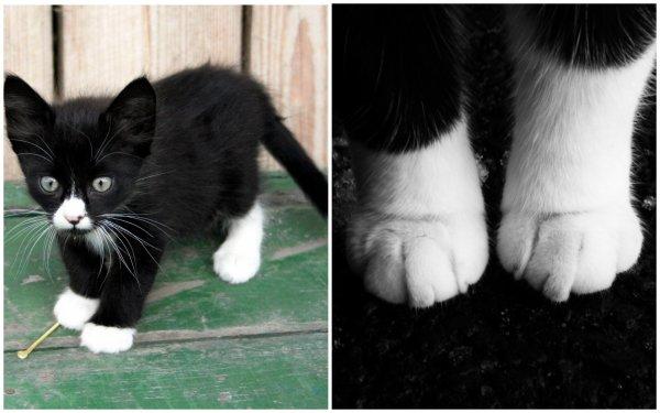Почему кошки носят «носки» на лапках: Учёные назвали причину необычного окраса животных