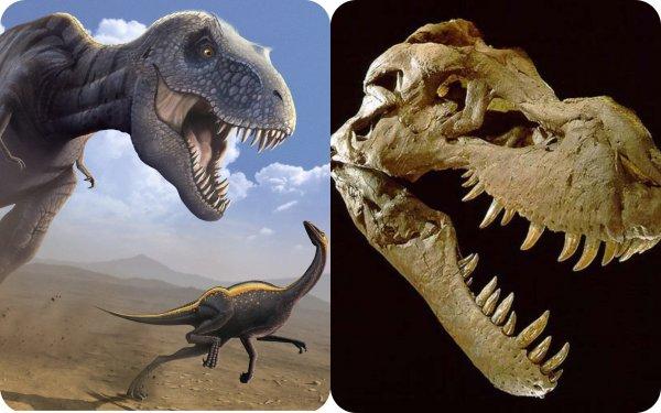Родственники Ти-Рекса? Учёные идентифицировали останки динозавров, найденные 30 лет назад