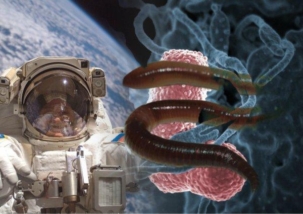 Червь с Нибиру проел дырку в «Союзе»: «Роскосмос» и NASA скрывают атаку Планеты Х на МКС