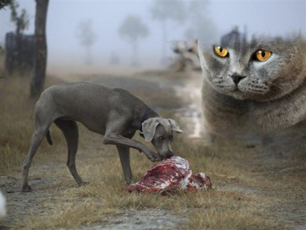 Защитники животных предупреждают: Диета без мяса смертельно опасна для котов